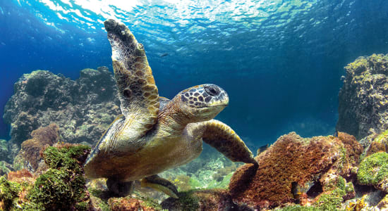 1 slide enchanted galapagos underwater sea turtle pano