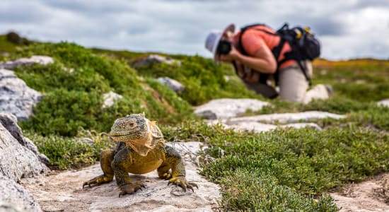 galapagos south plaza island tourist photographing iguana