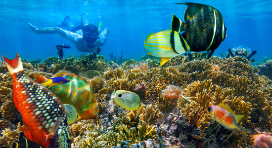 man snorkeling with colorful fish
