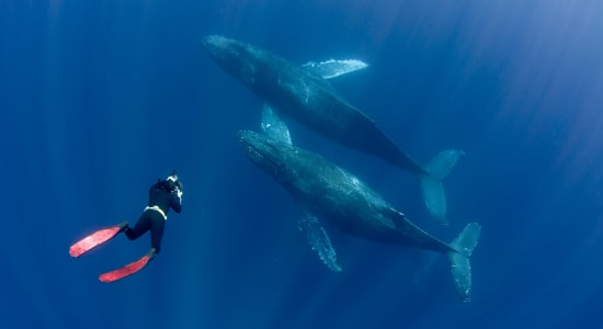 1 slide snorkeling humbacks ocean pano