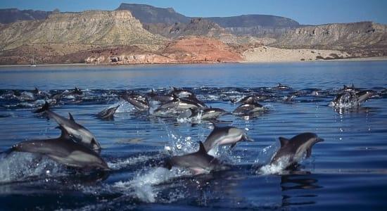 mexico baja dolphin pod coastline