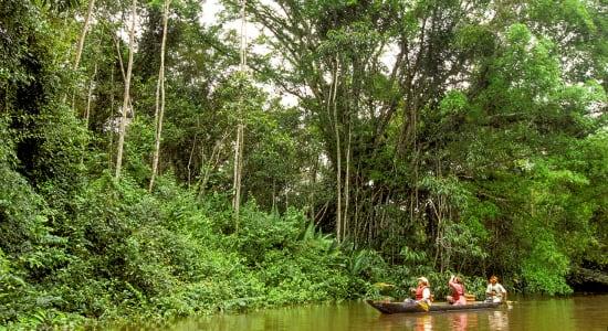 peru amazon exploring rainforest by boat