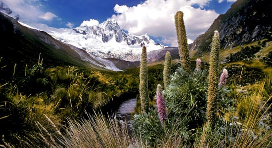 peru cordillera blanca valley meadow flowers