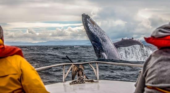 humpback whale watching canada new brunswick