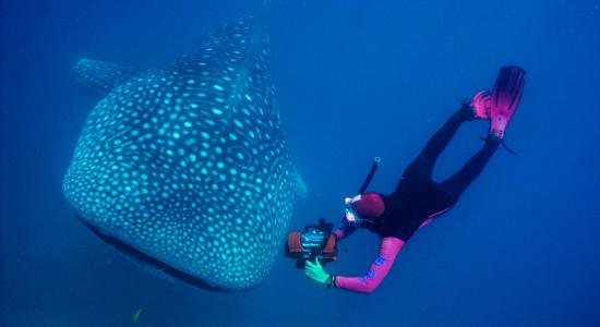 1 slide australia ningaloo zegrahm whaleshark snorkel pano