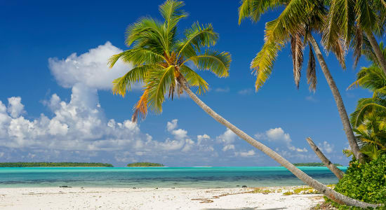 aitutaki cook islands palm trees paradise