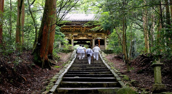 1 slide japan shikoku temple trek forest pano