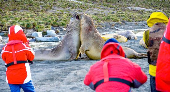 sea lions beach antarctica people