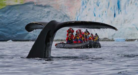 antarctica whale tail zodiac adventure