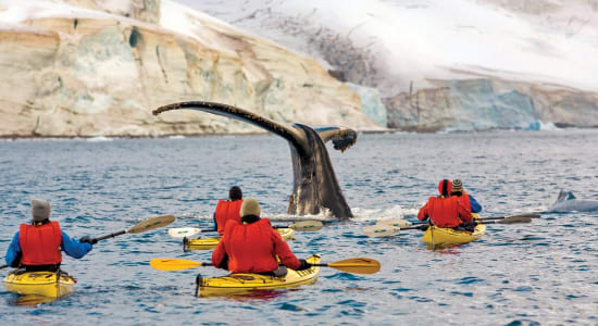 antarctica humpback whale kayakers errera channel