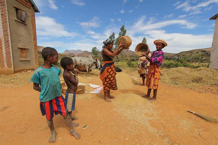 Women and children from Madagascar's Betsileo tribe pour rice from baskets
