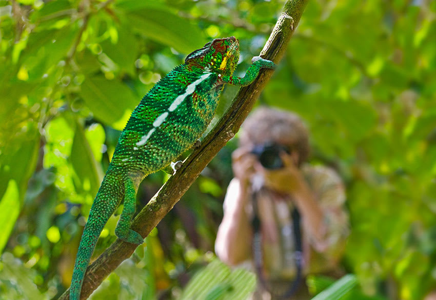 Photographer and chameleon on tree branch in Madagascar