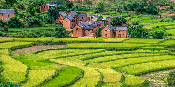 Red brick homes against bright green terraced rice fields in Madagascar village