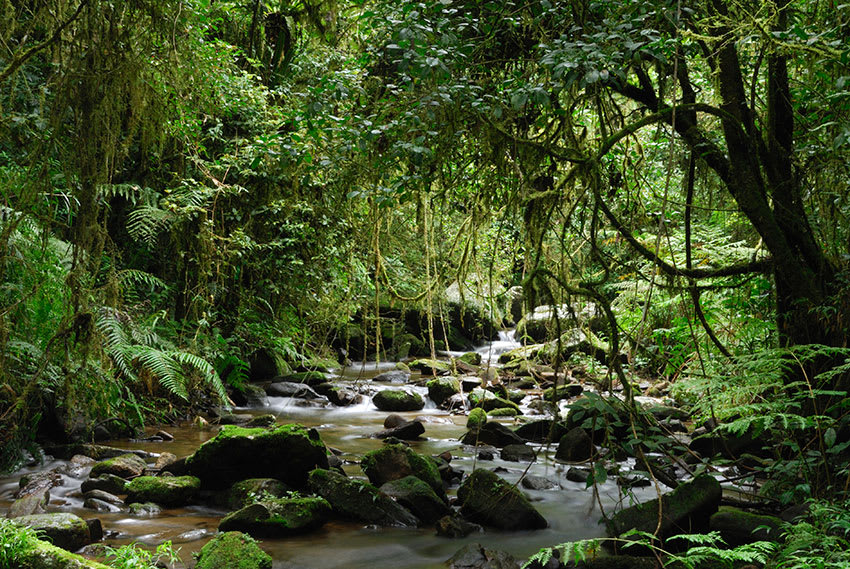 Boulder-strewn stream sheltered by trees at Ranomafana National Park