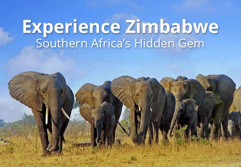 Herd of elephants walking in Zimbabwe