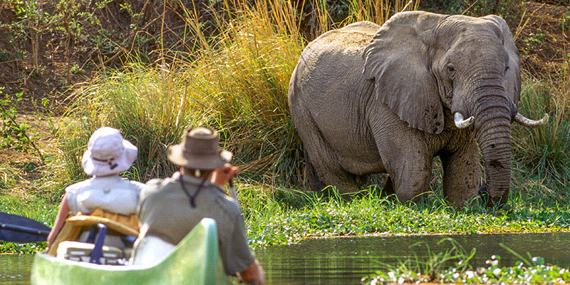 Travelers in canoe taking photo of elephant at river bank