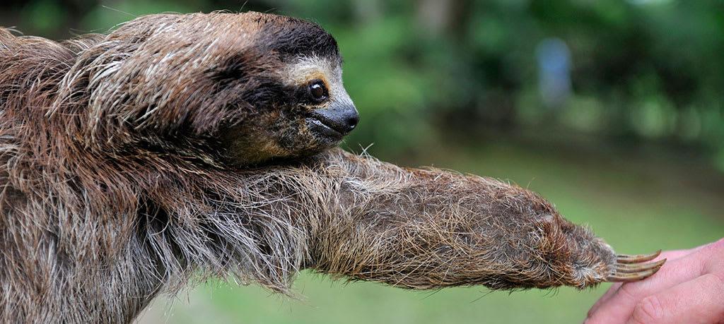 Sloth inspiration