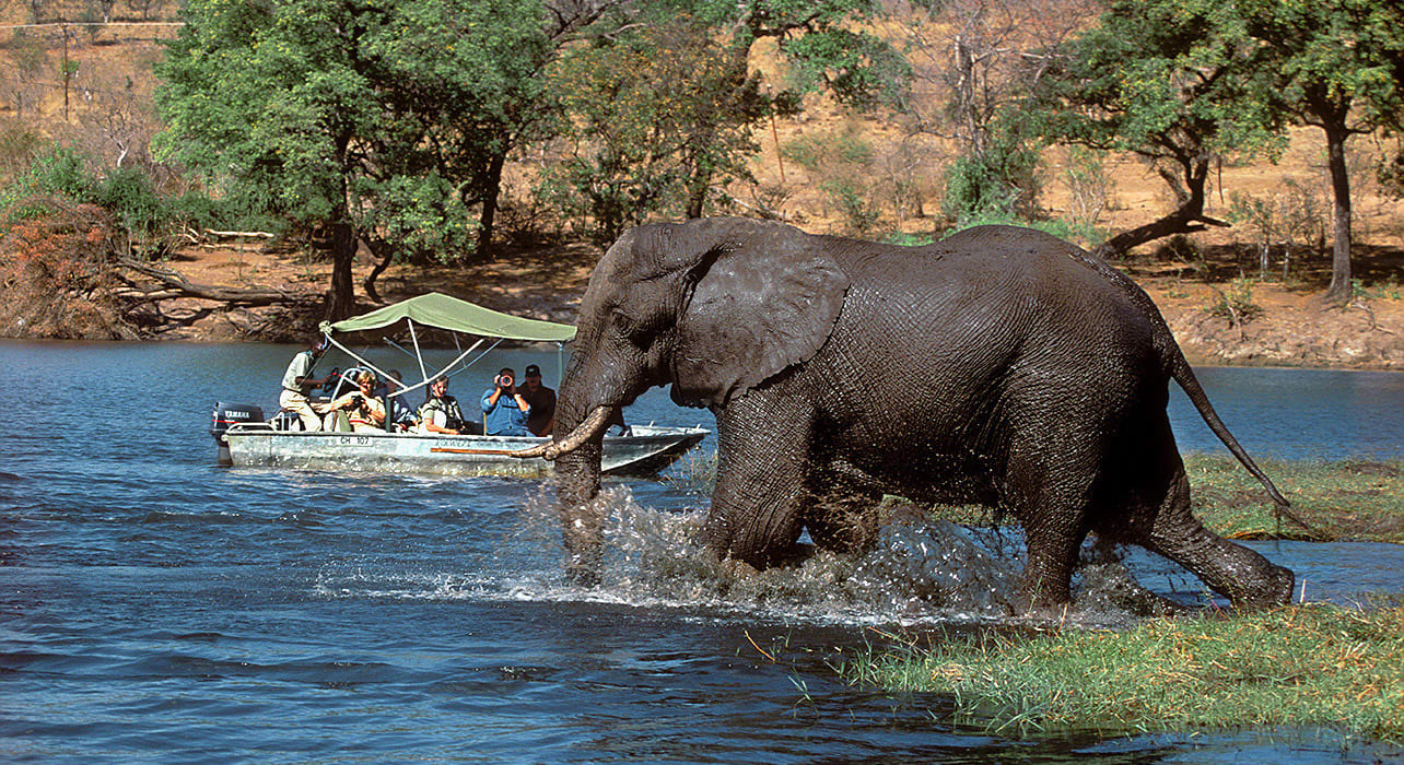 viewing elephant by boat