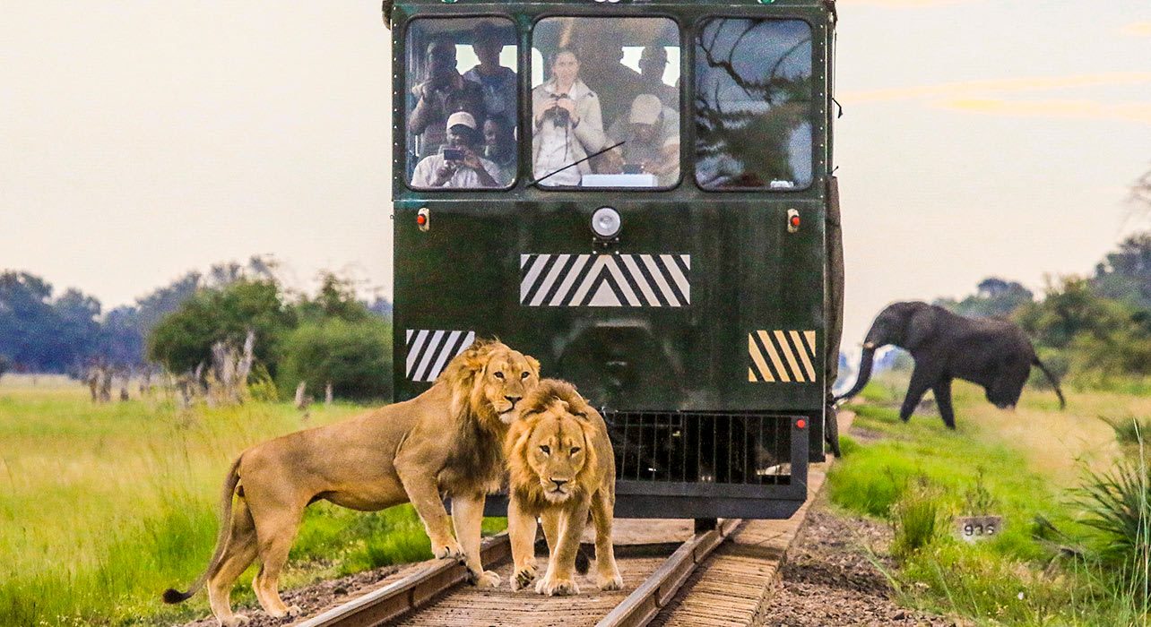 zimbabwe africa safari imvelo train elephant express nqwele and bomani