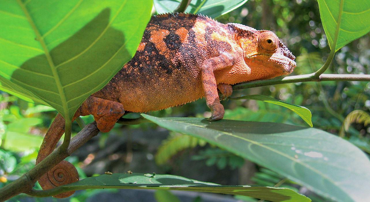iguana nature tree