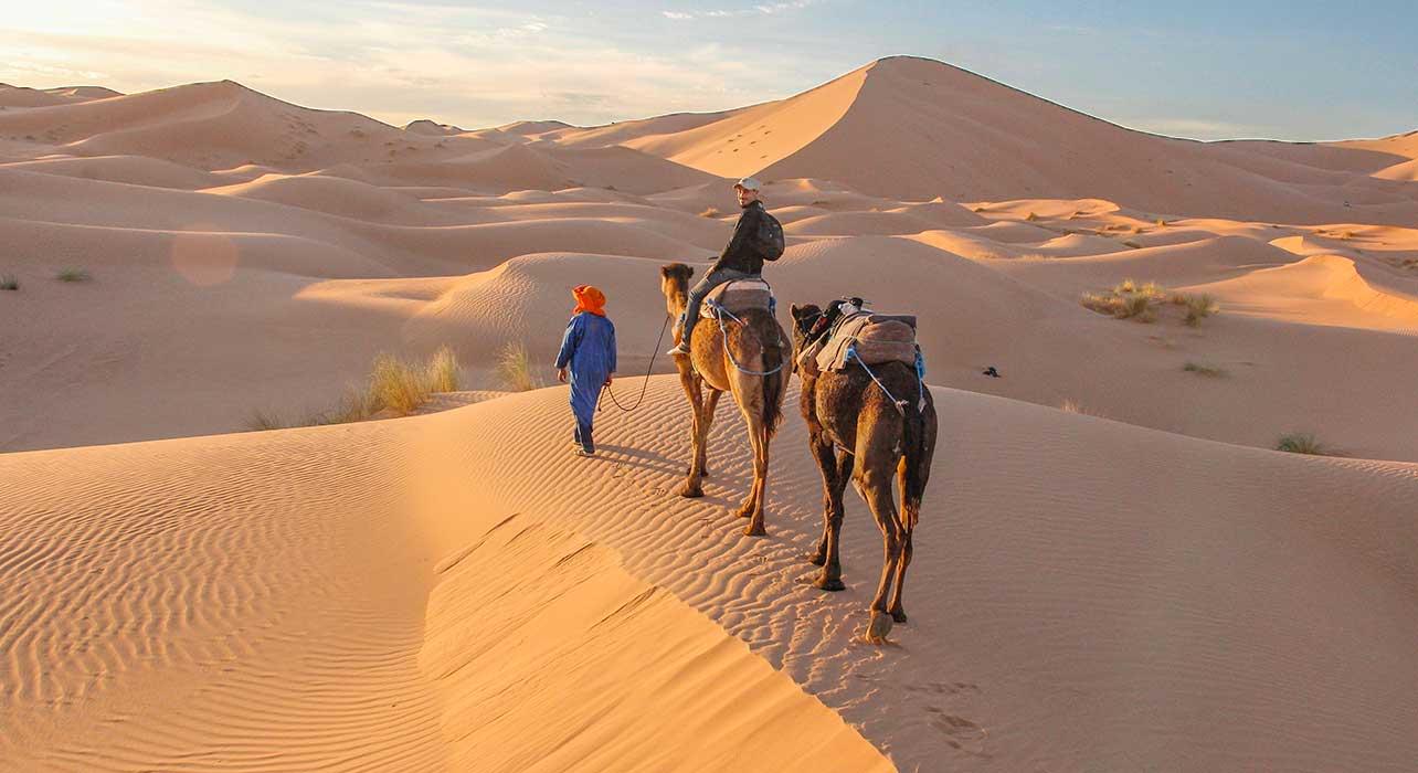 sahara dunes berber camel