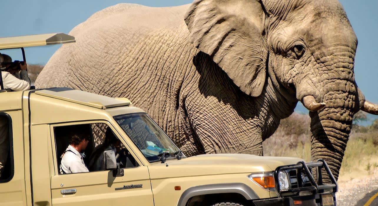 namibia desert elephant game view