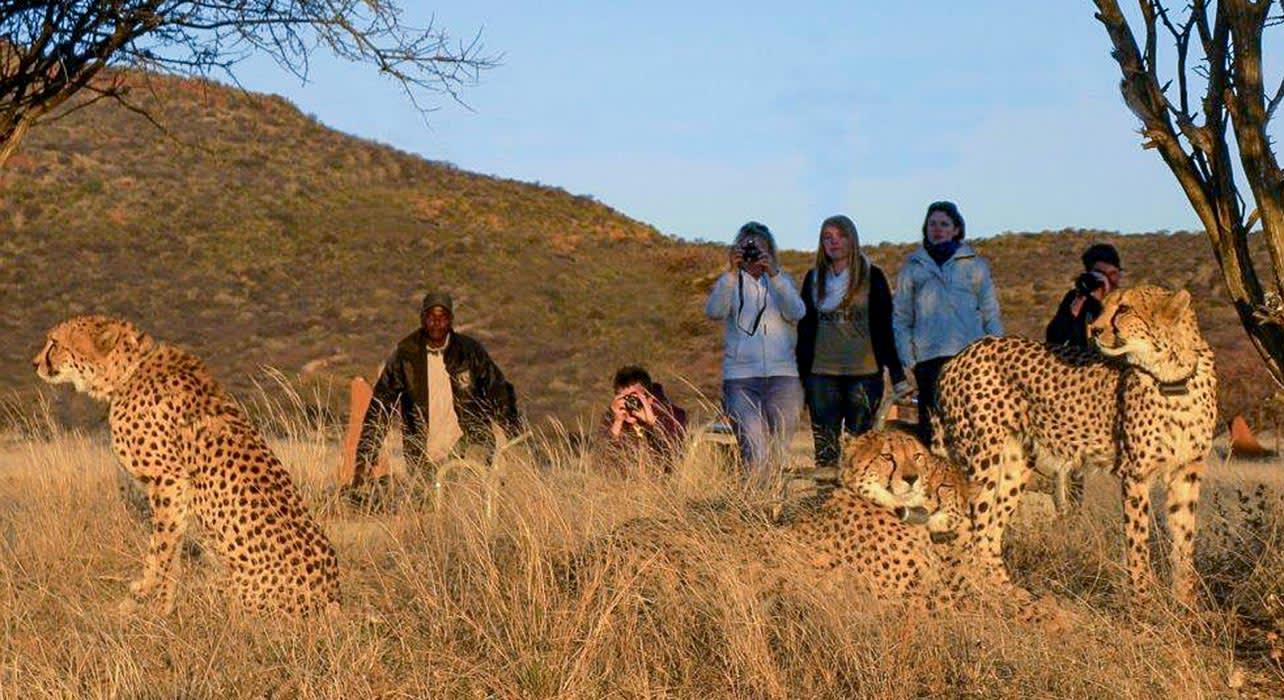tracking rehab cheetahs namibia