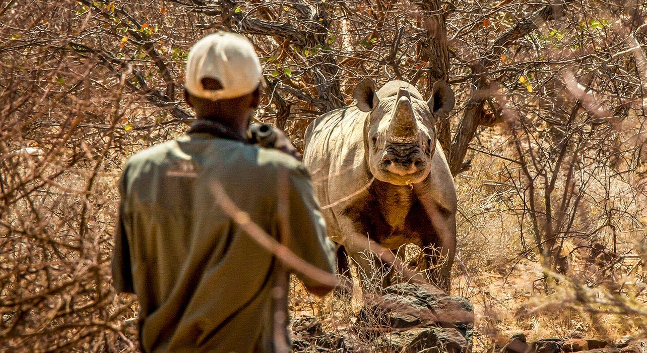 black rhino game view guide