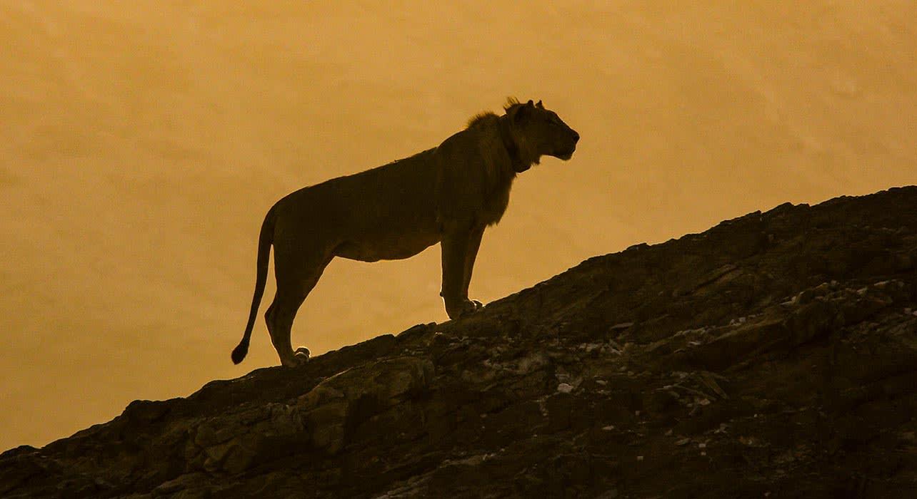namibai desert dune lion collar