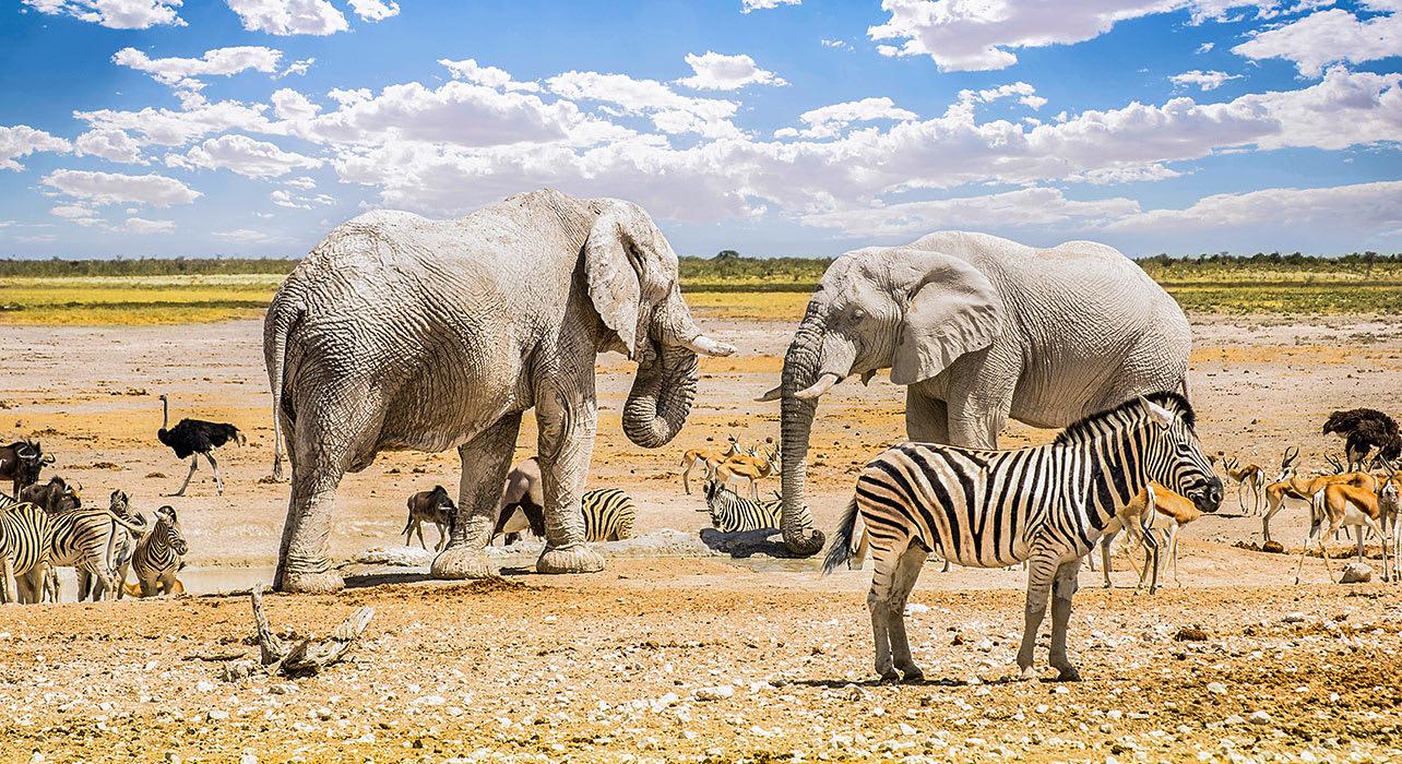 elephant zebra ostrich namibia