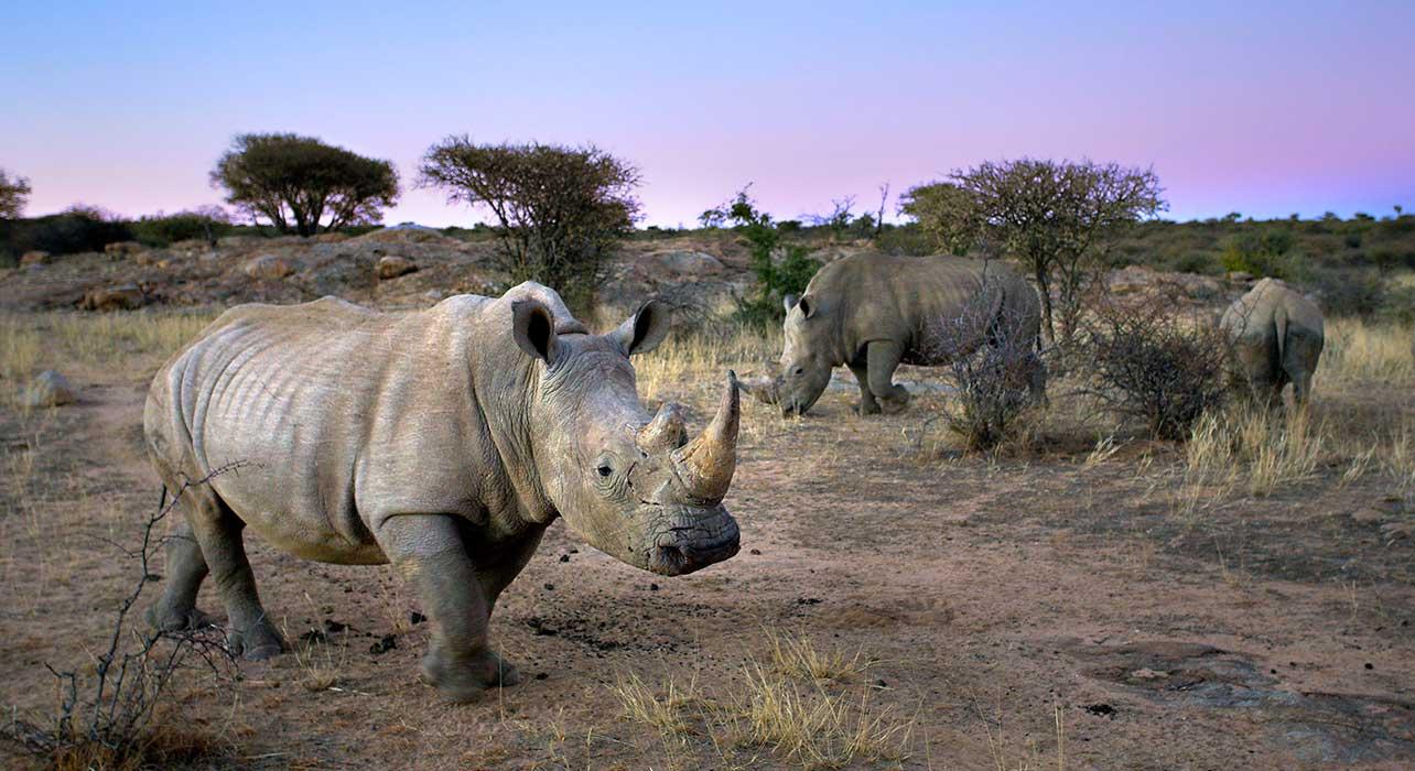 3 slide namibia rhino desert pano
