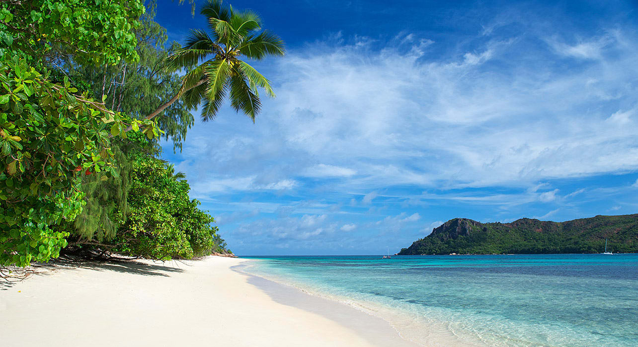 seychelles palm tree beach scene