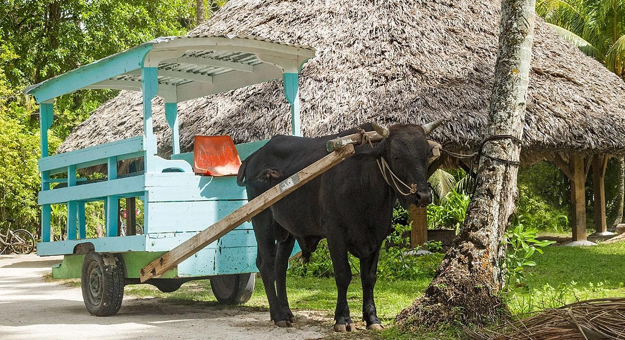 seychelles la digue island