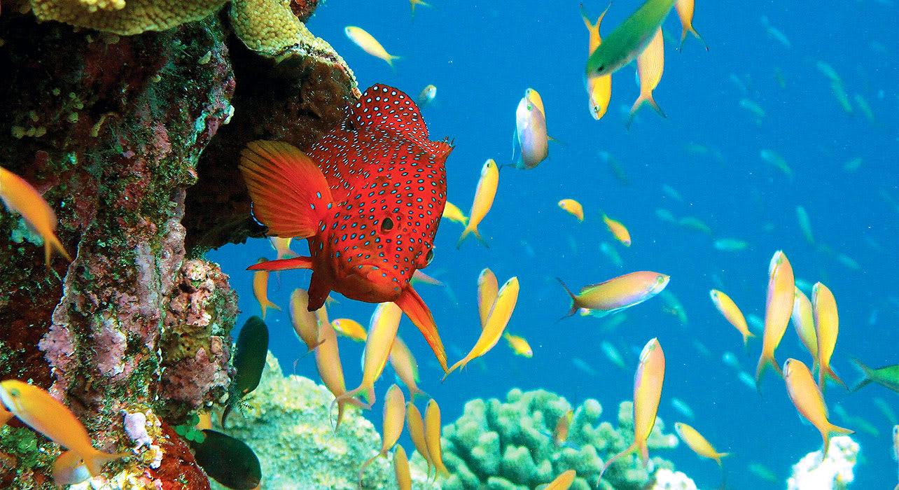 seychelles underwater reef fish
