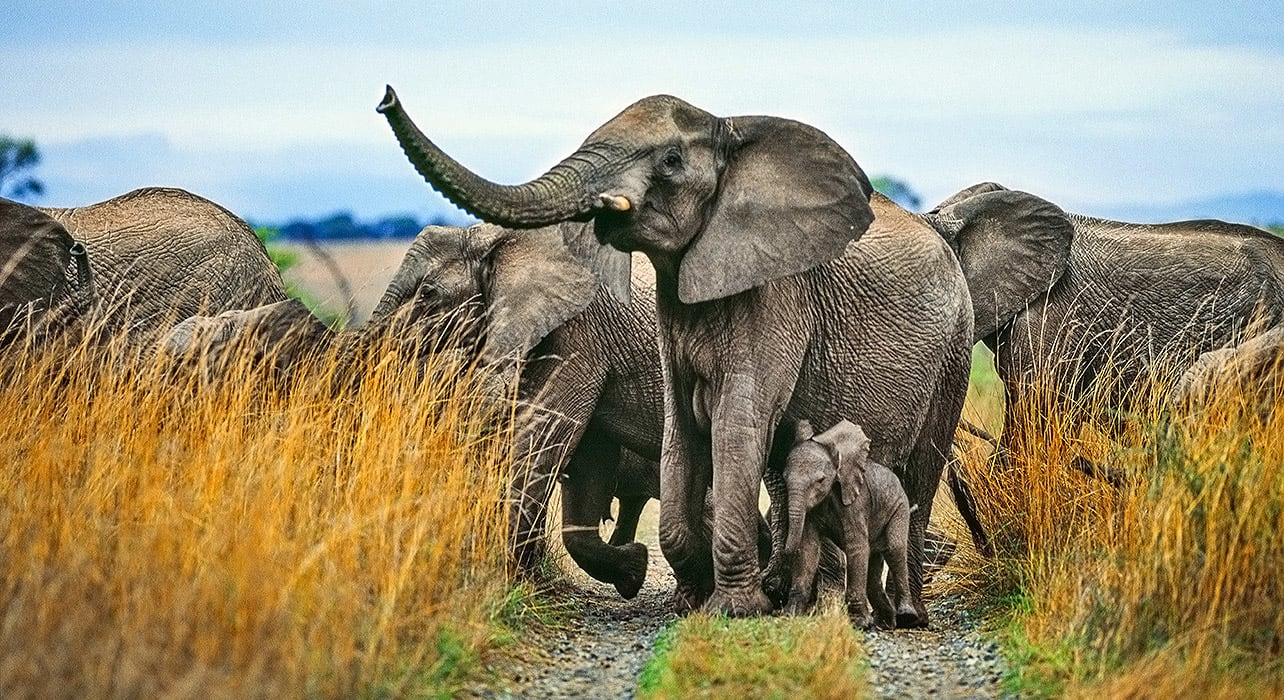 1 slide botswana south africa victoria falls elephant pano