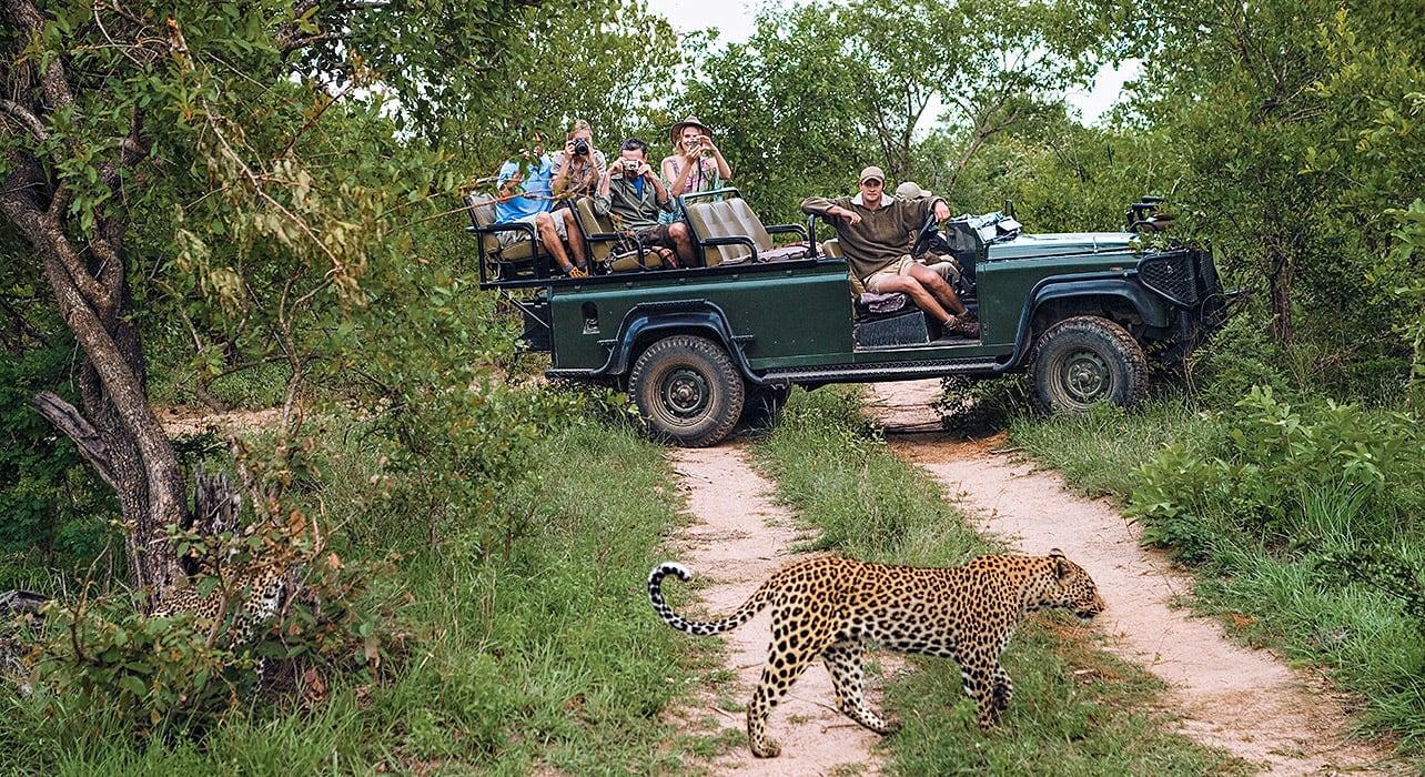 safari vehicle leopard