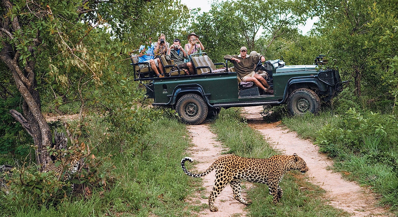 safari vehicle leopard