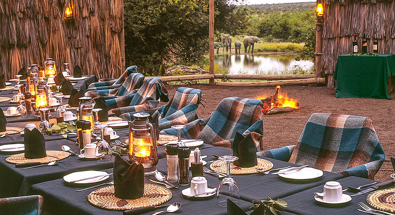 south africa safari camp dining elephants