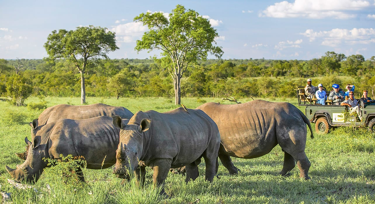 4 slide rhino game drive pano