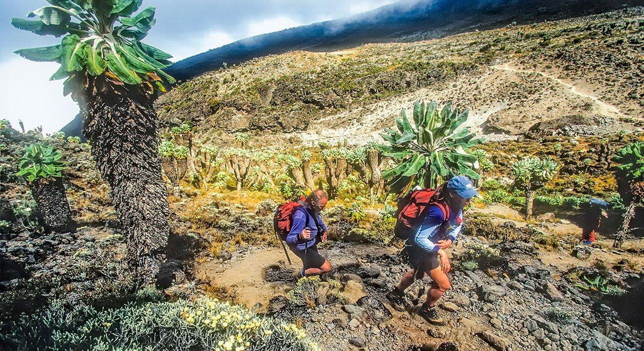 kilimanjaro trekkers