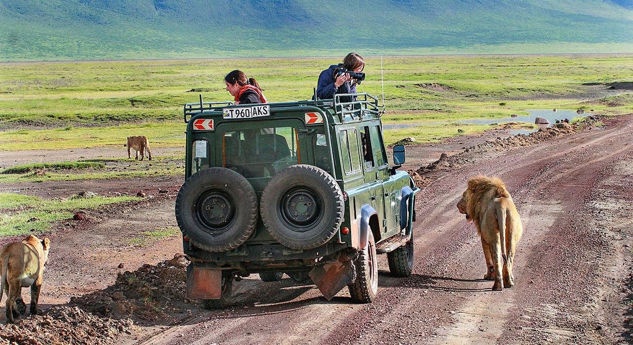 2 slide tanzania safari lion pano