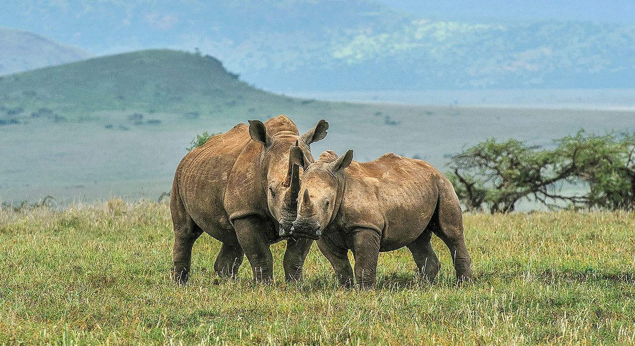 3 slide tanzania rhinocerus hug pano