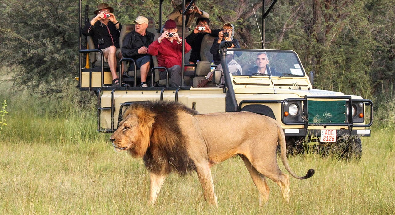 zimbabwe safari lion tracking jeep