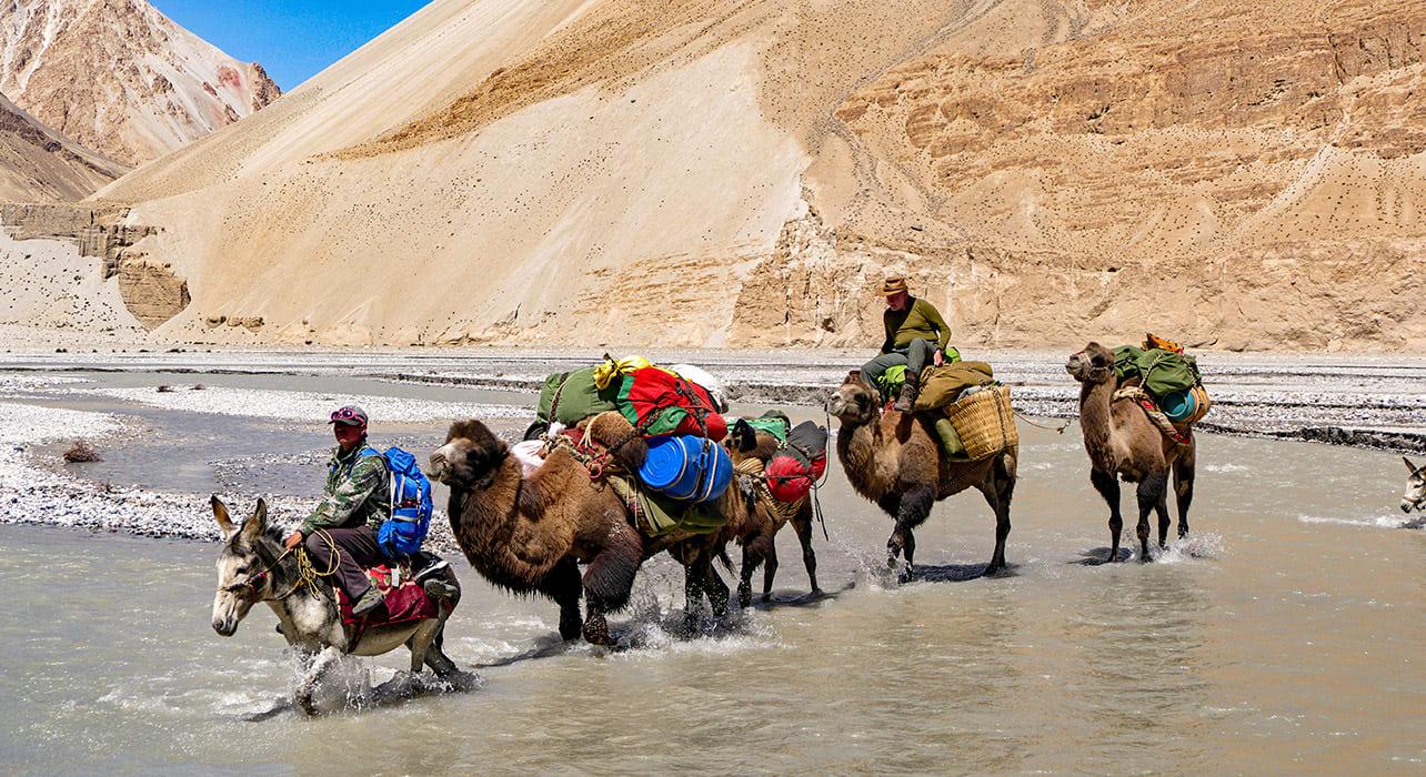china karakoram china river crossing by camel