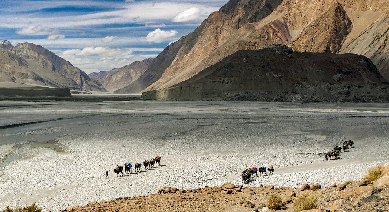 china karakoram camel caravan leaving shaksgam