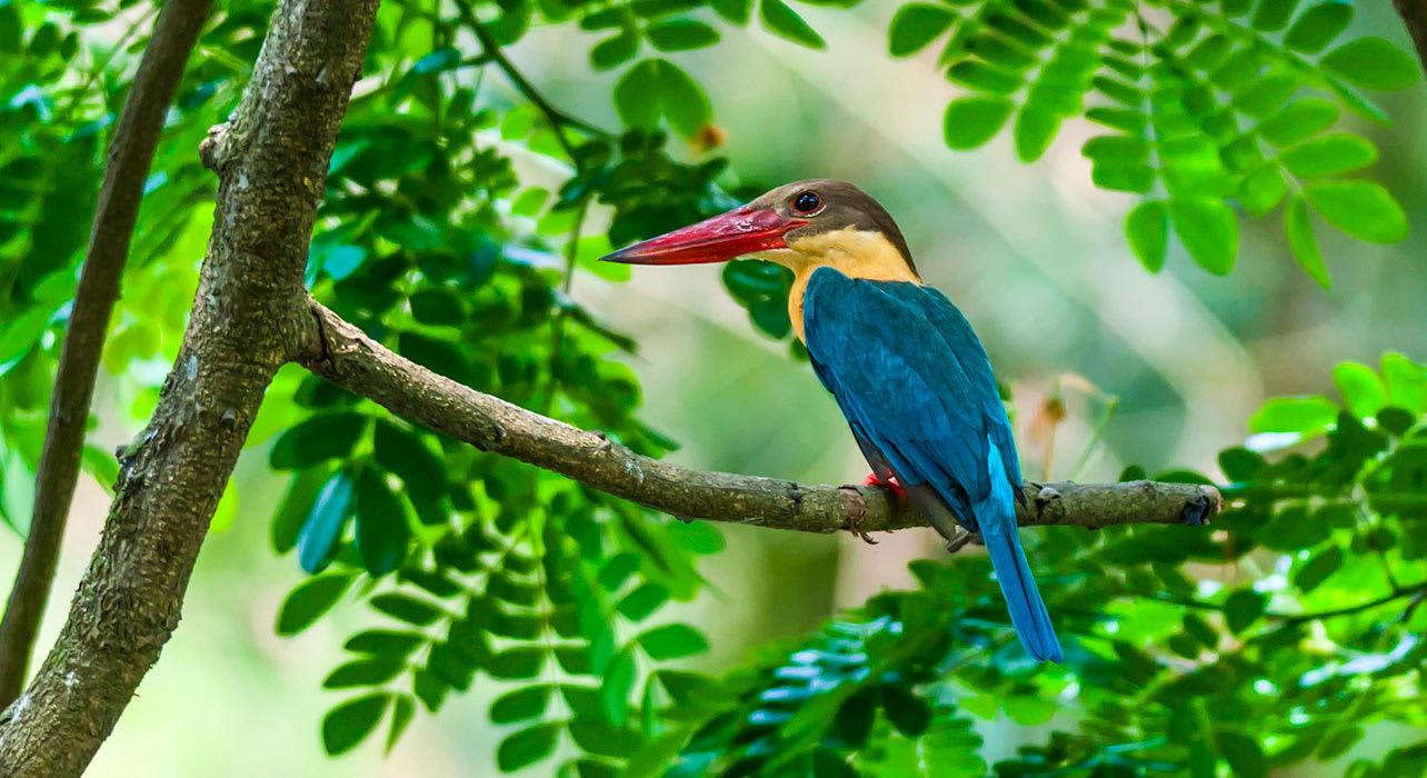 india nagaland exotic bird