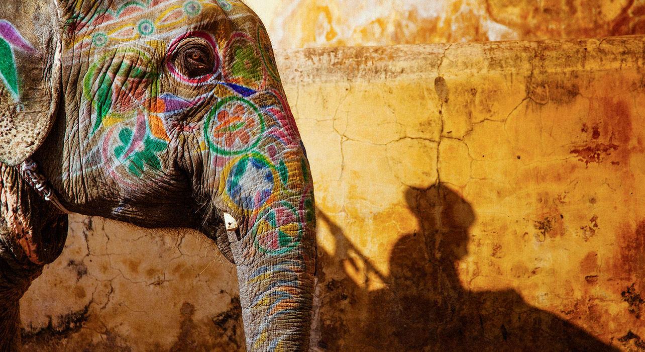 india rajasthan elephant painted