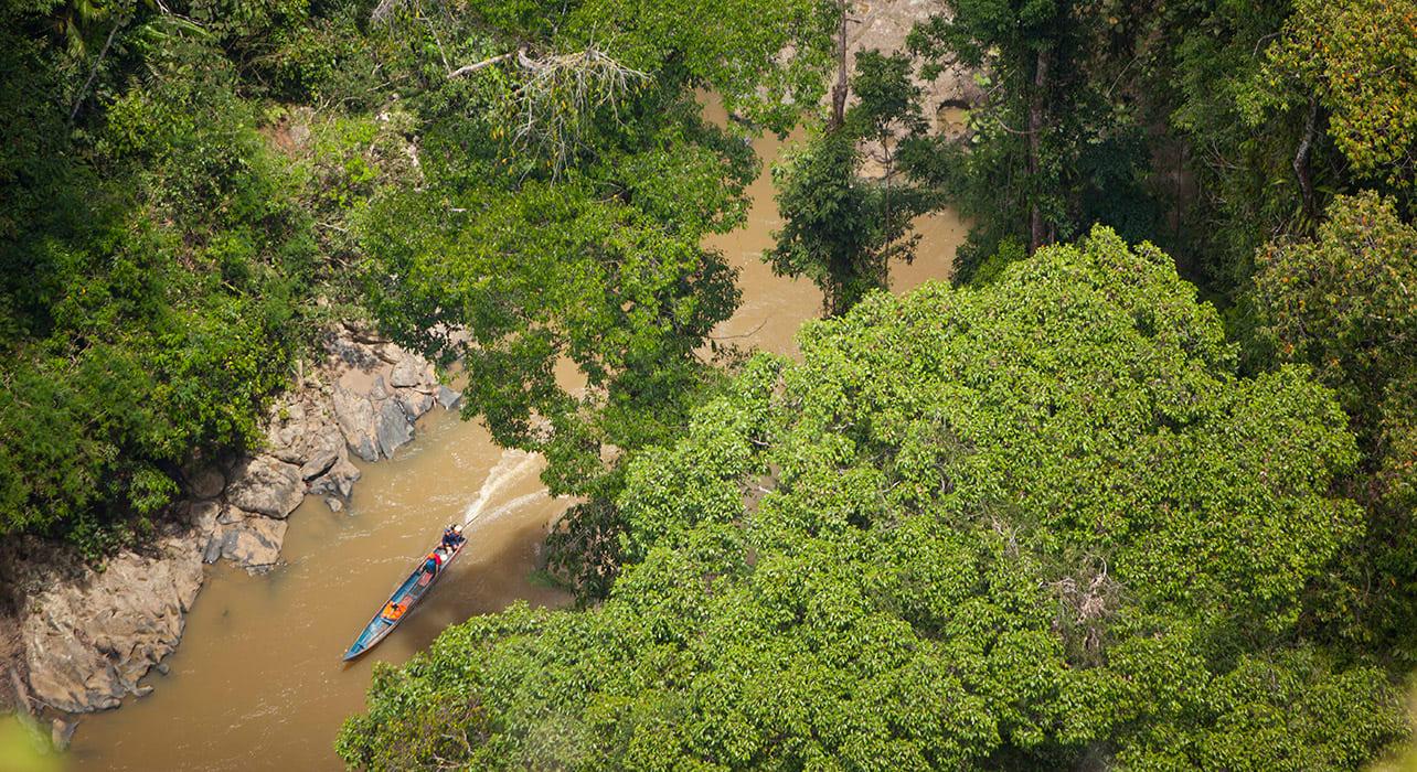 4 slide borneo river jungle pano