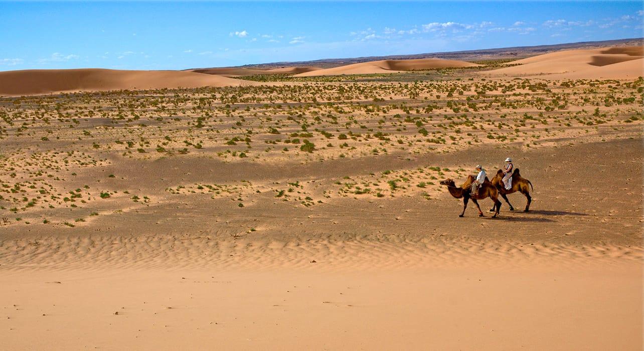mongolia gobi desert camels dunes