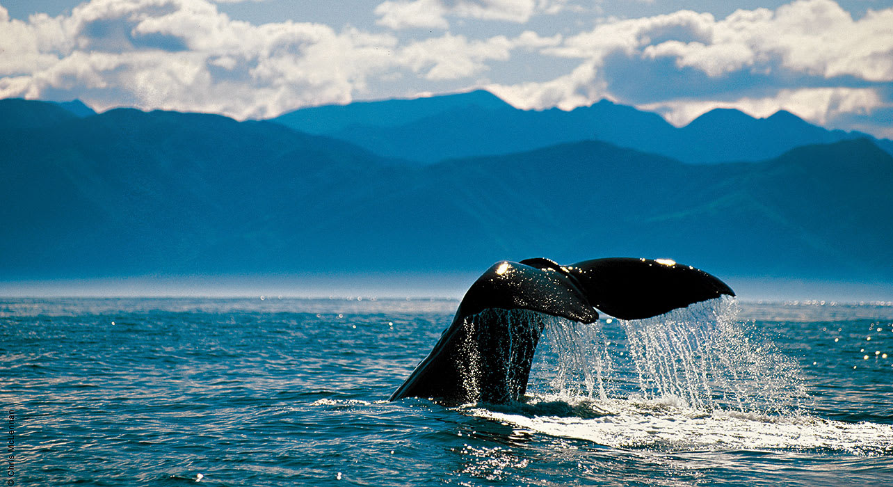 whale remote cruise